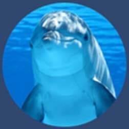dolphins| Hawaii Island Recovery