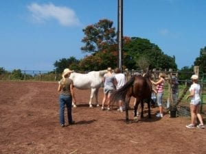 Clients interact with horses