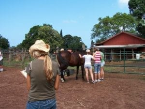 Equine Assisted Therapy - farm