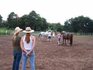 Equine Assisted Therapy horses