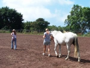 Equine client Hawaii Island Recovery