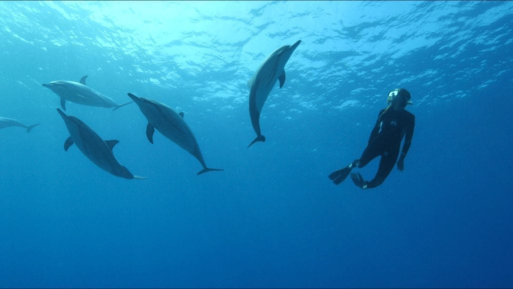 Wild Dolphins with Eliza | hawaiianrecovery.com
