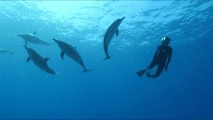 dolphins client Hawaii Island Recovery