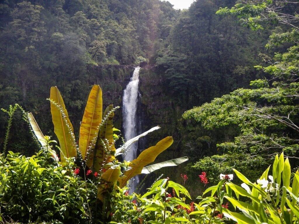 Exploring Hawaii: Akaka Falls