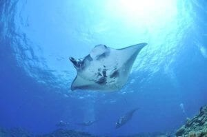 Manta-Ray - Hawaii Island Recovery excursion