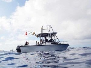 Dolphin Assisted Therapy   boat