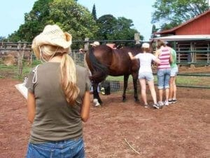 Equine Assisted Therapy | clients