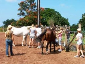 Equine Assisted Therapy | HIR