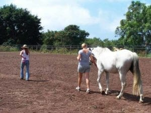 Equine Assisted Therapy | client