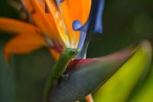 Gecko on the flower