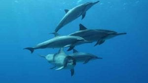 Beautiful wild dolphins