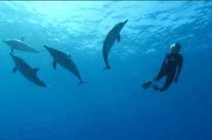 Wild Dolphin Assisted Psychotherapy