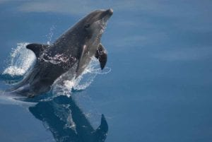 Explore a dolphin assisted psychotherapy in Hawaii