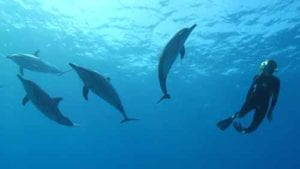 Eliza Wille | surrounded by wild dolphins
