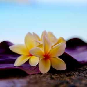 Alcohol help in Hawaii