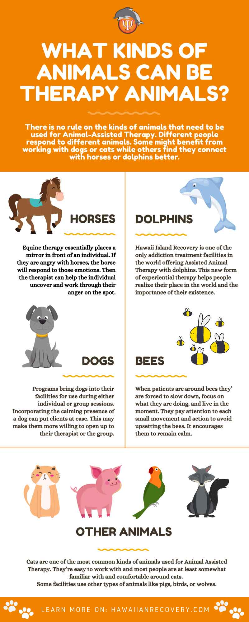 Infographic | What kinds of animals can be therapy animals