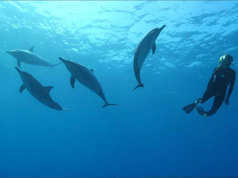 Wild Dolphin Assisted Psychotherapy at Hawaii Island Recovery
