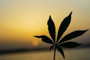 Marijuana Addiction